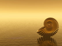 Gold Shell Royalty Free Stock Image