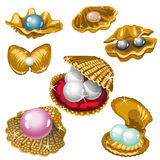 Gold shell with white, black, pink and blue pearls Royalty Free Stock Photo