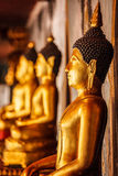 Gold sitting Buddha statues in Thailand Royalty Free Stock Photos