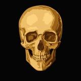 Gold skull Stock Photos
