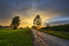 Gold in the sky. Sunset on a rural road with cornfields Royalty Free Stock Photography