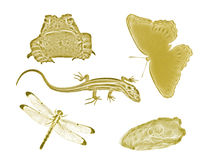 Gold Small Backyard Animals and Insects Stock Photos