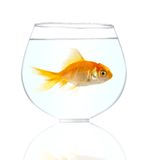 Gold small fish Royalty Free Stock Photography