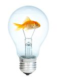 Gold small fish in light bulb Royalty Free Stock Photos