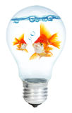Gold small fish in light bulb Royalty Free Stock Photography