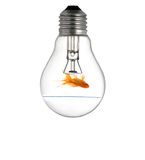 Gold small fish in light bulb Stock Image