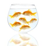 Gold small fishes Stock Image