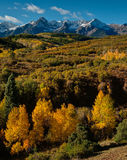 Gold And Snow On Dallas Divide. This classic view of the Sneffels Range looks especially pretty after an overnight blanket of snow. I would have liked all the stock photos
