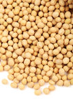 Gold soybean Royalty Free Stock Photo