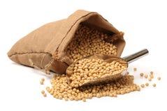 Gold Soybean Stock Photo