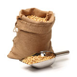 Gold soybean Stock Image