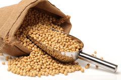 Gold soybean Stock Photo