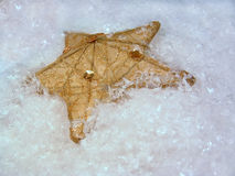 Gold Star on Snow. A gold star tree ornament on snow Stock Photos