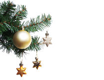 Gold stars on Christmas tree branch Royalty Free Stock Photography