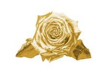 Gold stieg Stockfoto