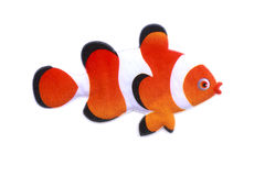 Gold stripe Maroon Clownfish - Premnas biaculeatus - Stock Image Royalty Free Stock Images