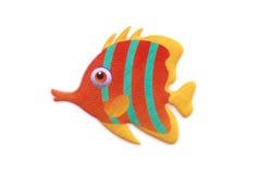 Gold stripe Maroon Clownfish - Premnas biaculeatus - Stock Image Stock Photo
