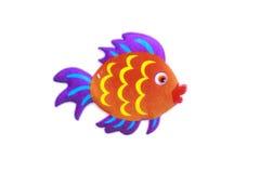 Gold stripe Maroon Clownfish - Premnas biaculeatus - Stock Image Stock Photography