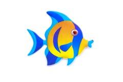 Gold stripe Maroon Clownfish - Premnas biaculeatus - Stock Image Stock Image