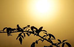 Gold Sun. Black branch on the background of the gold yellow morning sun Royalty Free Stock Photos
