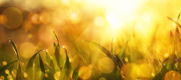 Gold sunlight on grass closeup with nice bokeh Royalty Free Stock Images