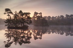 Gold sunrise over wild forest lake Stock Photos