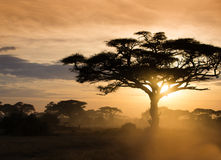gold sunset on the african vannah Stock Photography