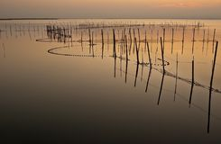 Gold sunset with at the Albufera stock images