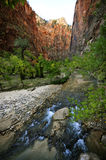 Gold Sunset Light on a Towering Rock and Stream in Zion National Park Royalty Free Stock Photos