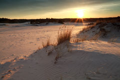 Gold sunset over sand dunes royalty free stock images