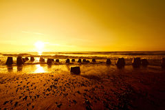Gold sunset over summer sea. Stock Photos