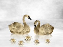Gold Swans and Water Lilies. Pair of beautiful gold and black swans facing each other as they float on a white lake of water.  5 gold water lilies floating on Royalty Free Stock Images