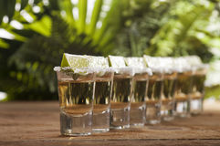 Gold tequila shots with lime fruits Stock Image