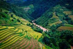 Gold terraced rice fields in Mu Cang Chai,Yen Bai, Vietnam. A river flow through gold season rice in Mu Cang Chai valley ,Yen Bai province, Vietnam royalty free stock photos