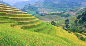 Gold terraced rice fields with sunlight in Mu Cang Chai, Vietnam Stock Image