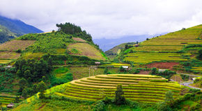 Gold terraced rice fields with sunlight in Mu Cang Chai, Vietnam Royalty Free Stock Photos