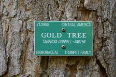A gold tree in Honolulu Stock Photography