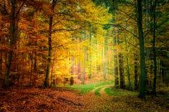Gold und grüner Weg im Wald in Polen Lizenzfreie Stockfotos