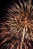 Gold und purpurrote Feuerwerke Stockfotografie