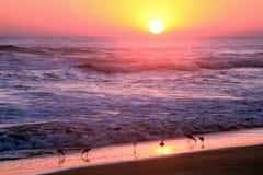 Gold und purpurroter Sonnenuntergang über den tropischen Vögeln, die auf pazifischem OC weiden lassen lizenzfreie stockfotografie