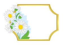 Gold vector frame with white chamomile Stock Photo