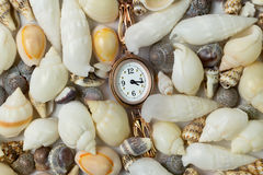 Gold watch and sea shells Royalty Free Stock Image