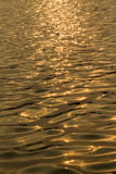 Gold water surface Stock Photography