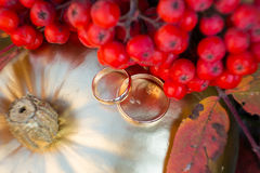 Gold wedding rings in autumn scenery Stock Image