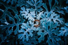 Gold wedding rings on blue sheets covered with hoarfrost. Gold wedding rings on blue sheets. blue background of a flower Royalty Free Stock Photo
