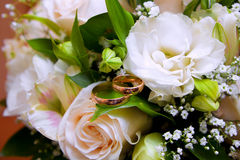 Gold wedding rings on colors Stock Images