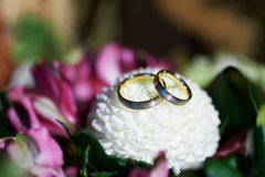 Gold wedding rings on flower aster Royalty Free Stock Photo