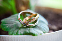 Gold wedding rings Royalty Free Stock Image