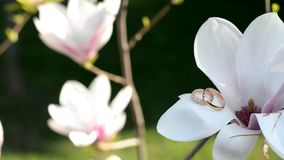 Gold wedding rings for lovers stock footage