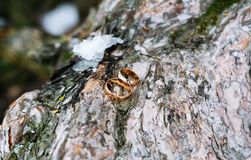 Gold wedding rings lying on the bark of the tree stock image